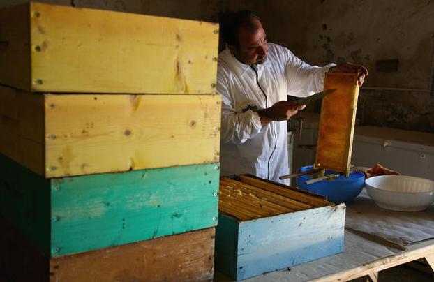 Γεμίζουν μέλι τα μελίσσια σε αυτή τη περιοχή; Μήπως μας κοροϊδεύουν;