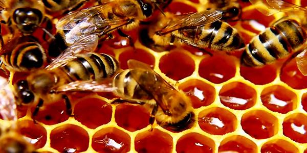 Πωλείται μέλι πορτοκαλιάς στην Μεσσηνία