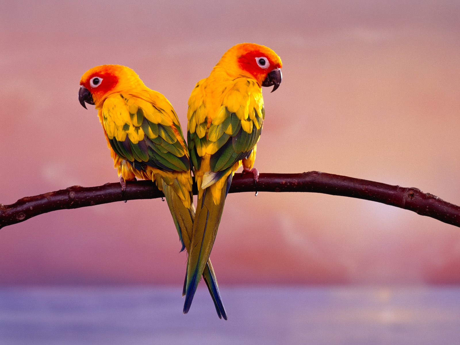 FULL WALLPAPER: Exotic bird wallpaper