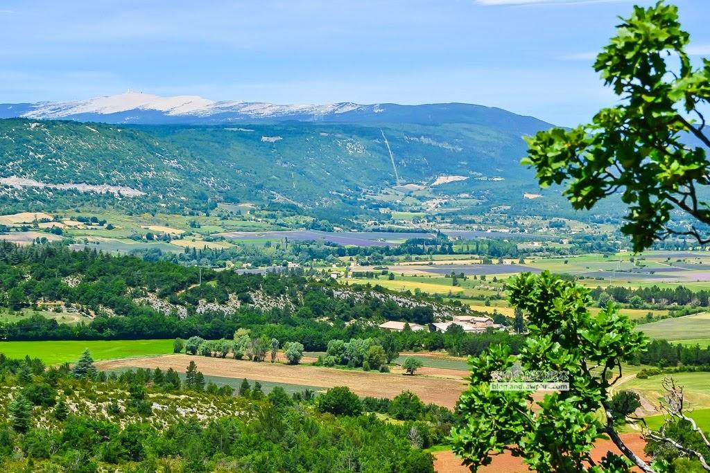 南法薰衣草景點,南法看薰衣草,普羅旺斯薰衣草景點
