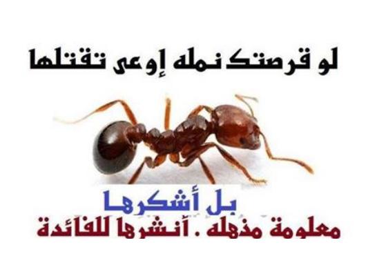 بعد معرفتكم فوائد قرص النملة للجسم ستبحثون عن النملة وتترجوها لتقرصكم