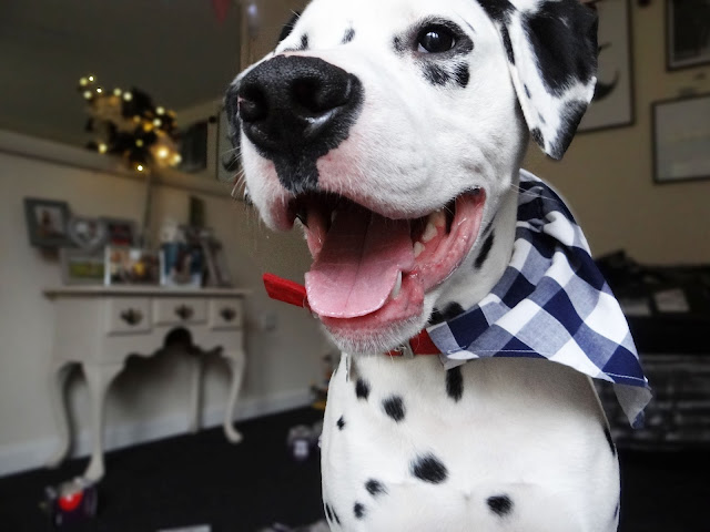 Pretty Little Paws Navy And White Check Design Dog Bandana