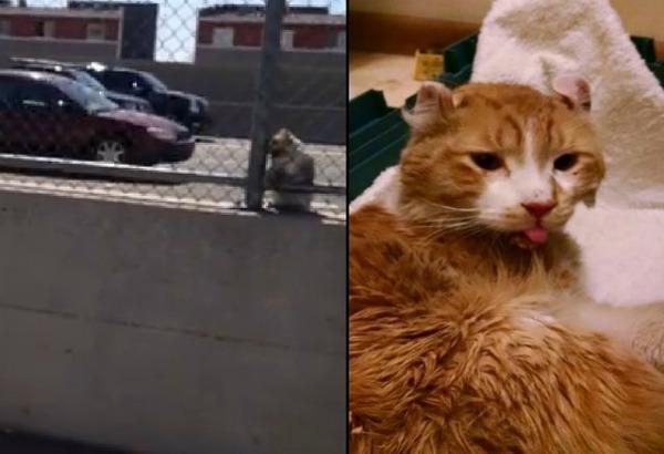 Teneri Cuccioli Notizie Questo Uomo Salva Un Gatto Dalla