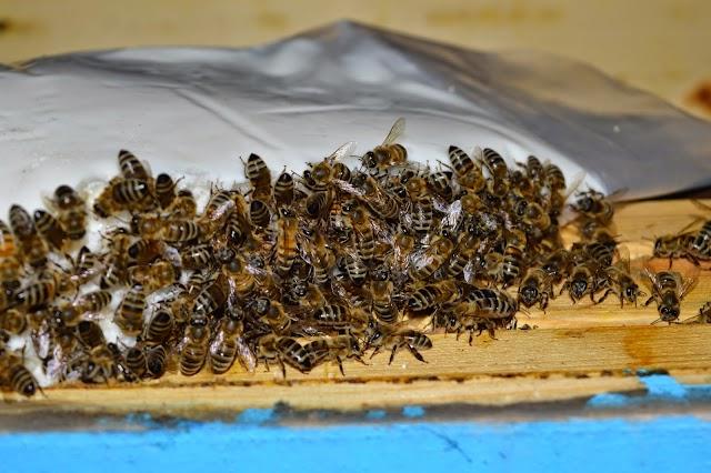 Απλή συνταγή σπιτικού ζαχαροζύμαρου: Από συνάδελφο μελισσοκόμο