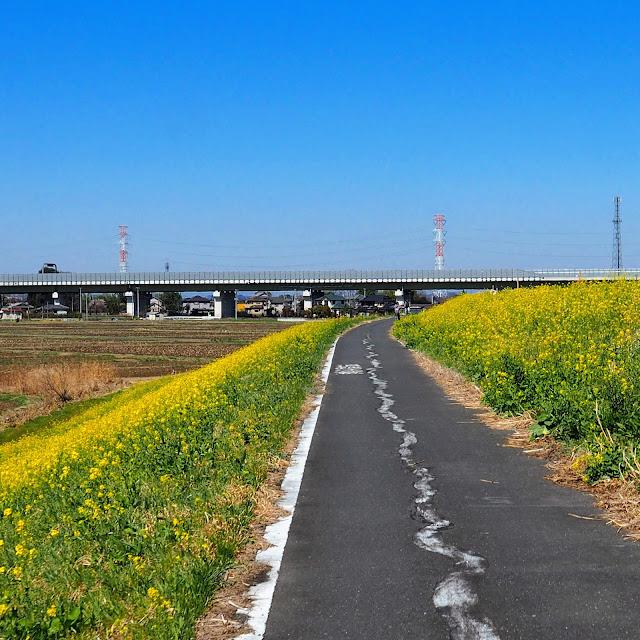 荒川自転車道 圏央道