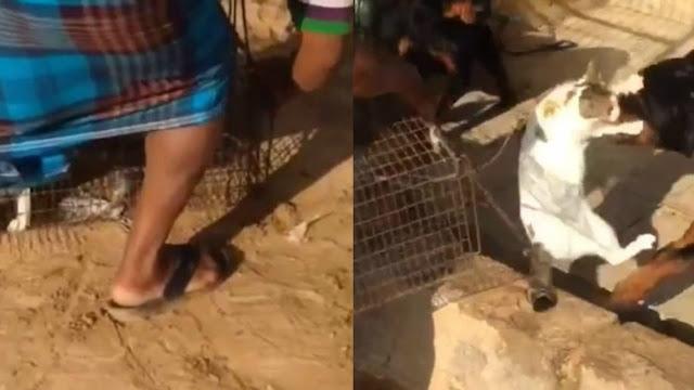 Masya Allah! Gak Punya Hati Pria Ini Hingga Tega Beri Makan Anjing Dengan Seekor Kucing Hidup