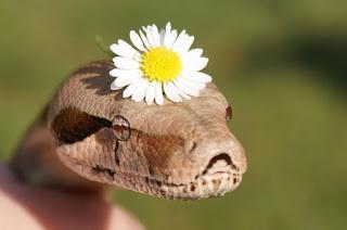 Serpiente con una flor en al cabeza
