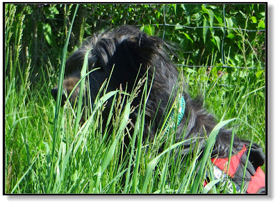 im Gras verschwunden, ein Suchbild