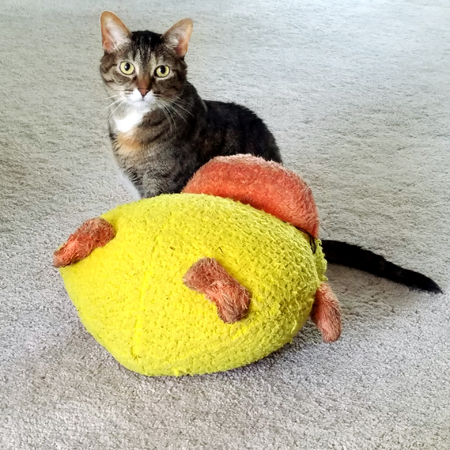 image of Sophie the Torbie Cat sitting next to a big plushy duck