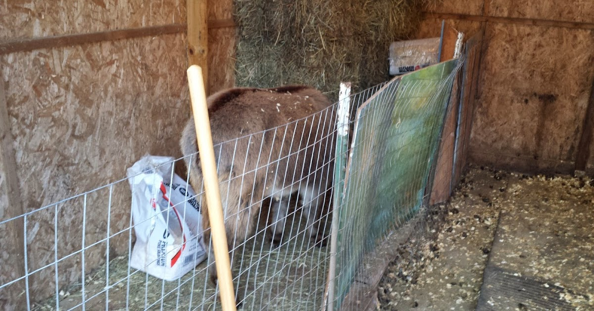 Updating The Shed: My Miniature Donkeys: Updating The Hay Aisle