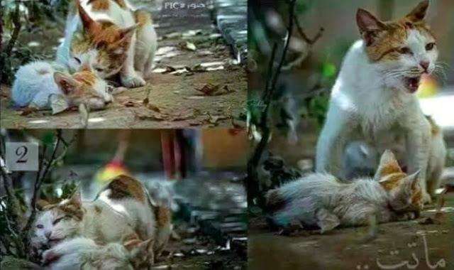 Surat Dari Kucing Liar: 'Jika Tidak Bisa Menyayangi Kami, Paling Tidak Jangan Sakiti Kami!'