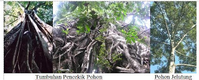 tumbuhan pencekik dan poon jelunteng, hutan basa, Ekosistem Darat Dan 6 Bioma