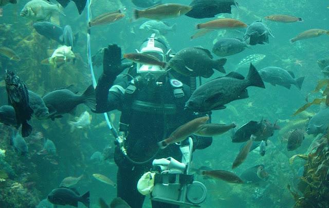 Tipos de tours no Monterey Bay Aquarium