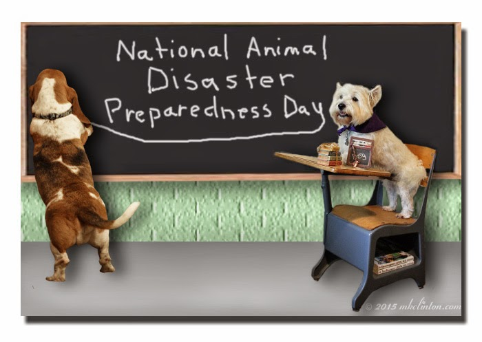 Basset Hound writing at chalkboard about Disaster Prep with Westie at desk