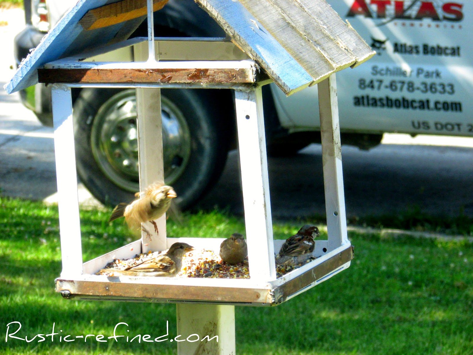 Do It Yourself Bird feeder