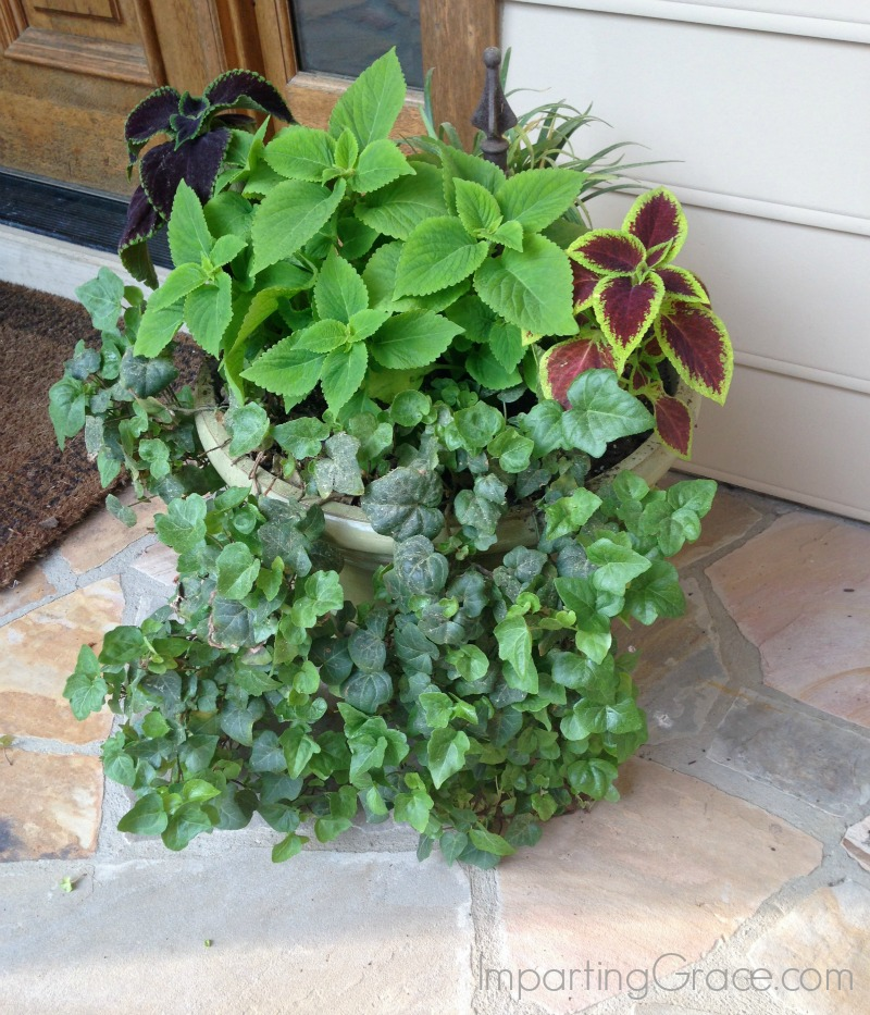 Imparting Grace: Best plants for a shady porch