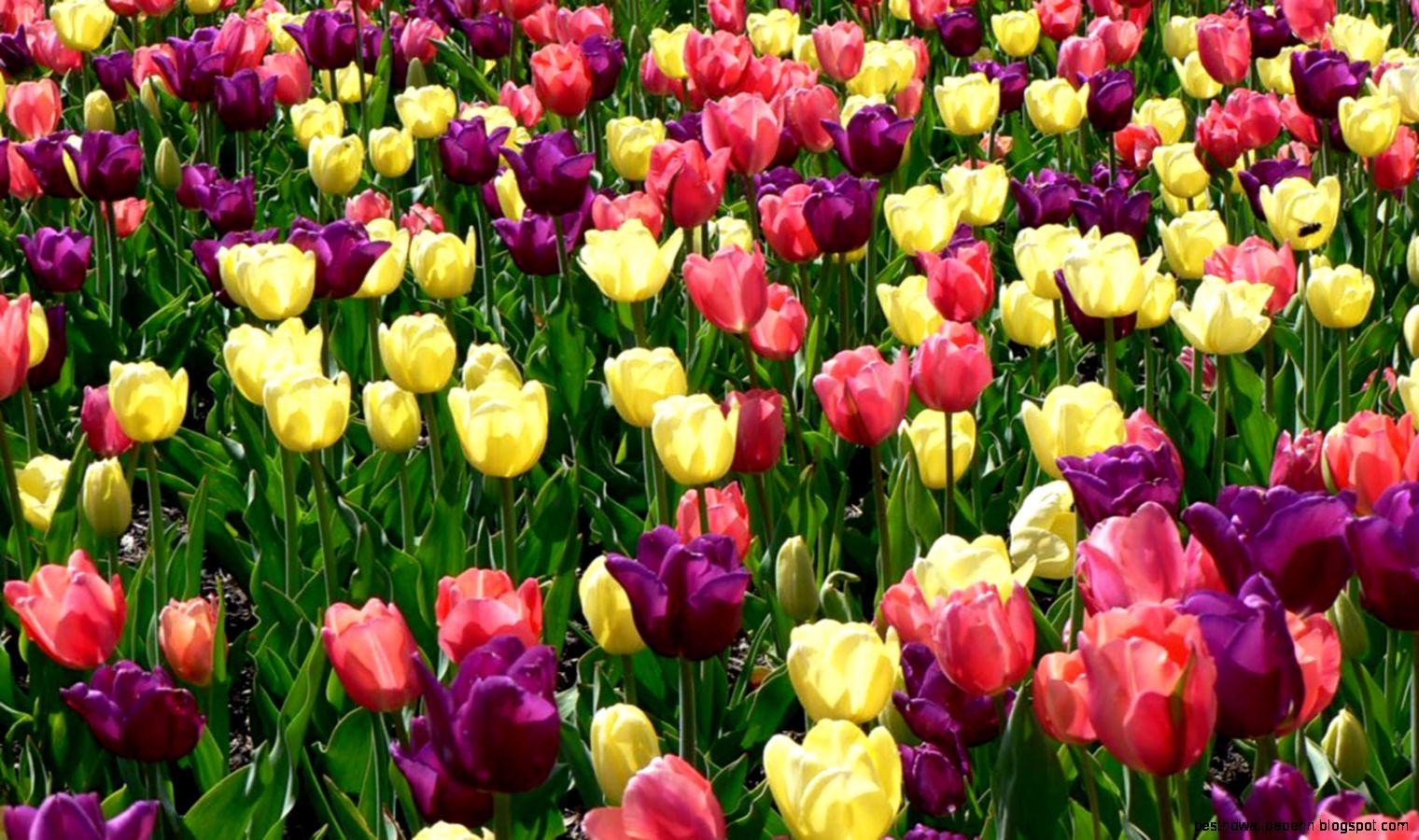 Spring Desktop Wallpaper Widescreen | Best HD Wallpapers
