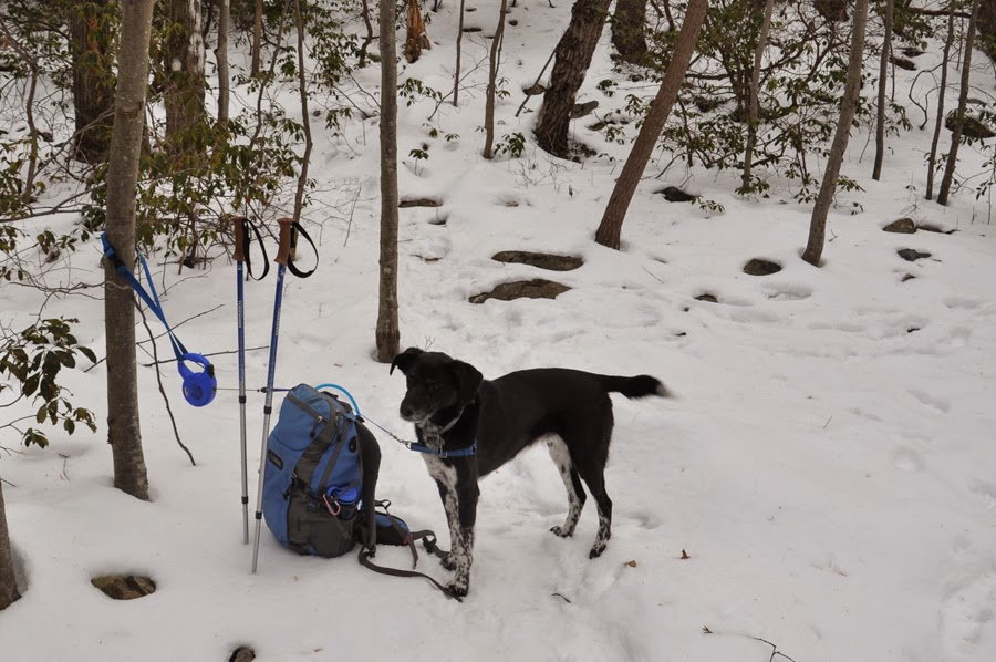 Deer lick shelter on appalachian trail obviously were