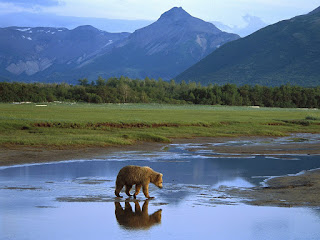 Katmai National Park & Preserve