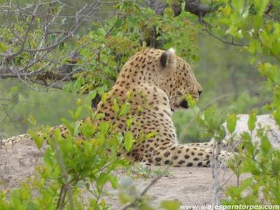 Viaje a Sudáfrica, 2º parte. El Parque Nacional Kruger.