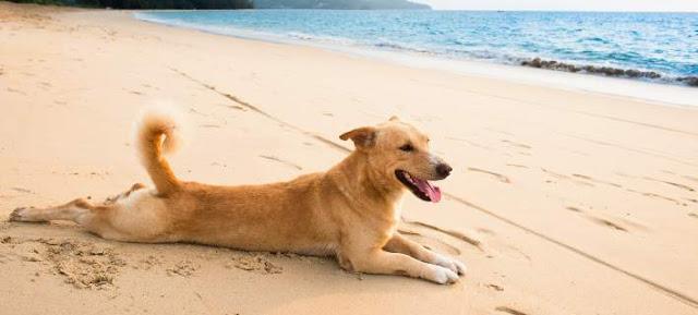 Τι πρέπει να προσέχουν οι ιδιοκτήτες σκύλων το καλοκαίρι