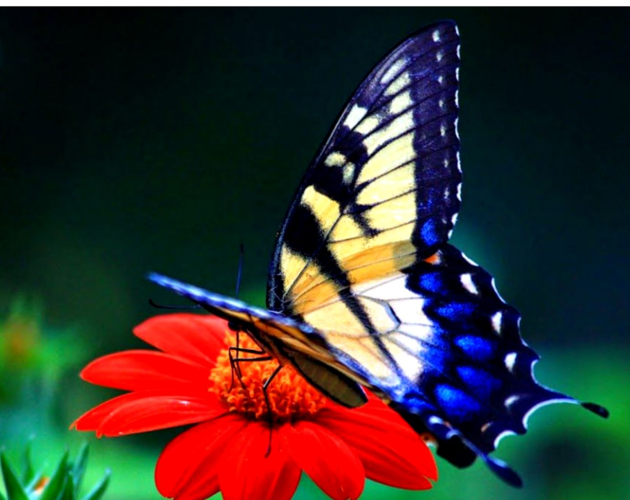 Butterfly Beauty Latest Hd Wallpapers Free Download List Wallpapers