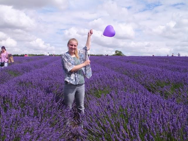 cánh đồng hoa oải hương đẹp nhất thế giới 3
