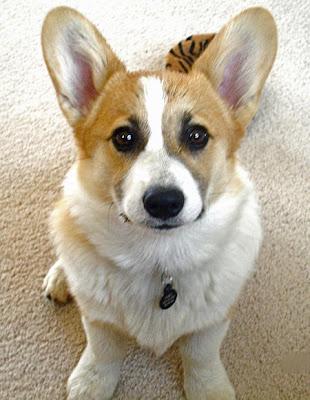 fotografia de perrito con cara tierna