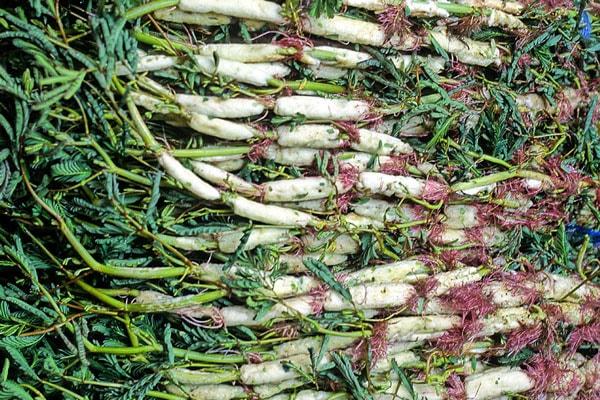 Công dụng của rau rút(rau nhút) không chỉ tốt về dinh dưỡng mà còn chữa nhiều bệnh