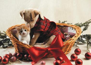 animales  con gorros de Navidad