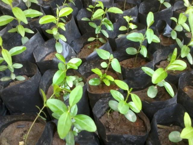 Kinh nghiệm chọn giống cây trồng lâu năm