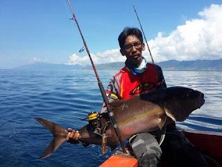 Mancing ikan Amberjack