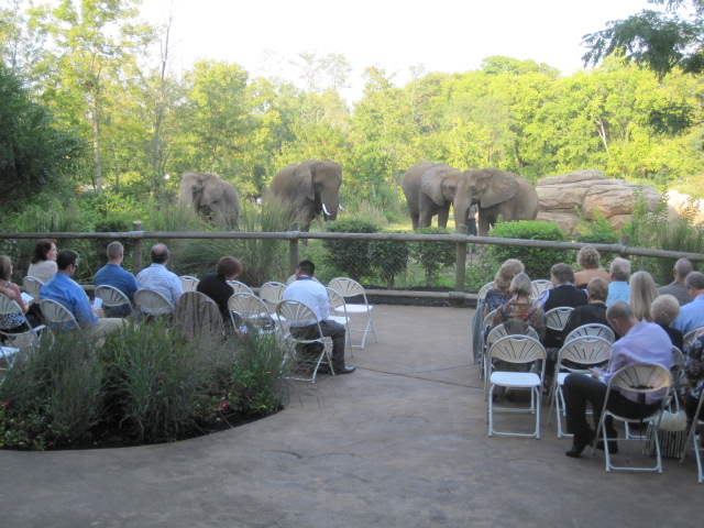 The Zoo Workers Brought Elephants To Fence Behind Us For Ceremony And At End Of While Everyone Cled