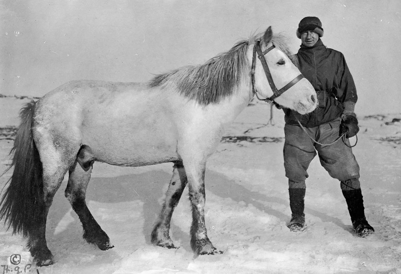 Chief Scientist Dr. Edward Wilson with Nobby the pony. The ponies were brought to haul sledges but proved ill-suited to the Antarctic climate and terrain. 1911.