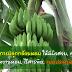 เทคนิคการปลูกกล้วยหอม ให้มีผิวสวย, ลูกใหญ่, รสชาติหวานหอม, ไร้สารพิษ, แบบประหยัดต้นทุน