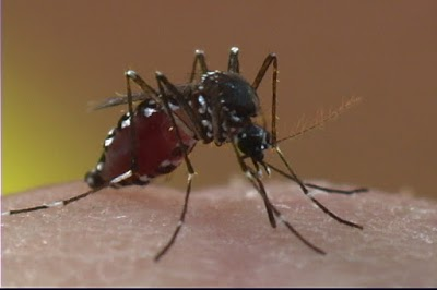 Atlanta, Southeast Region Top Mosquito Cities List