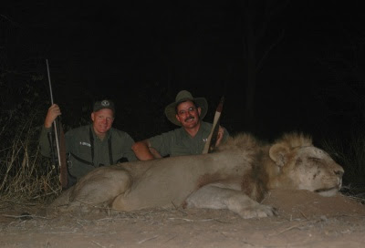 Hunting Non-Exportable African Lions - The New Norm?