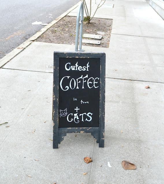Seatttle, seattleblogger, catlover, bremertonwa,travel, travelblogger,catlover, cats,catcafe,coffeeshop,wallingford,animalshelter,rescuecats