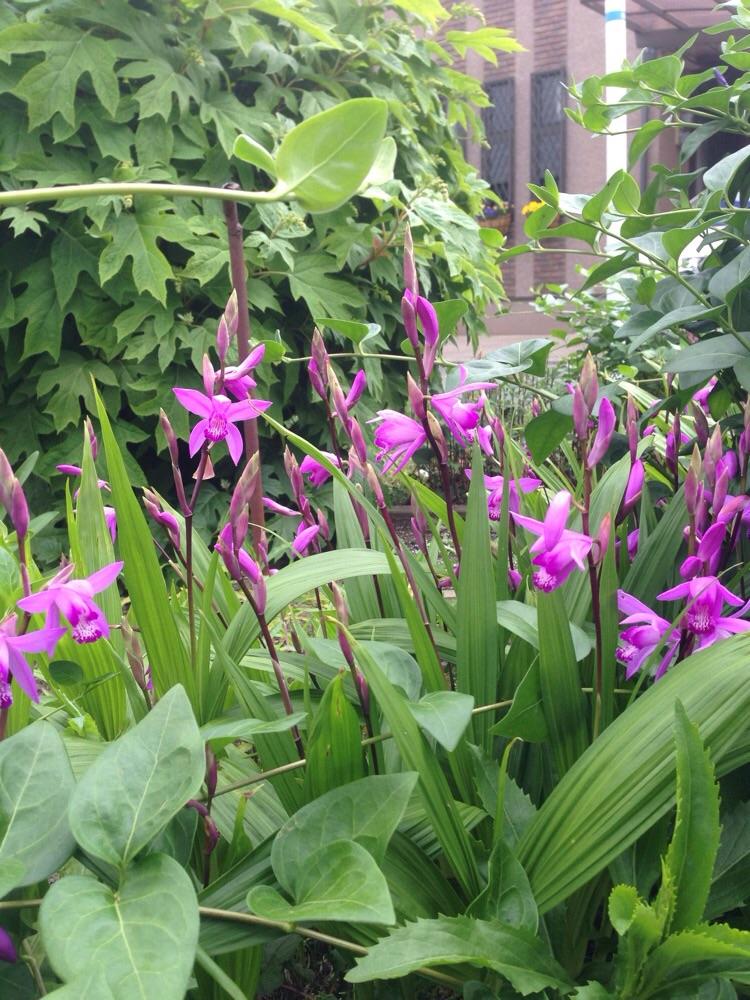 orchidee selvatiche coltivazione
