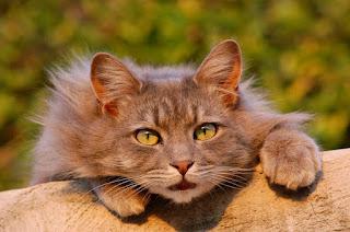 Кот приготовившейся к прыжку
