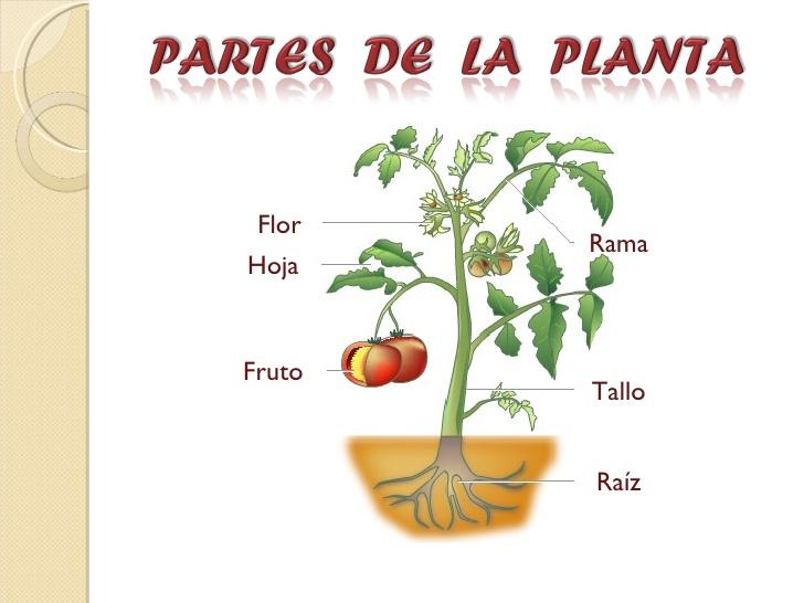 Una característicamuy especial de las plantas, es que realizan la