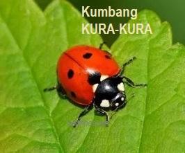 Anim Agro Technology Kumbang Kura Kura Dalam Ekosistem