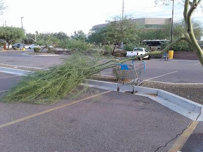 Broken Branch on Palo Verde Tree