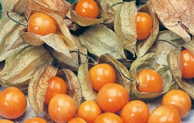 ripe cape gooseberry fruit