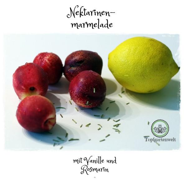 Gartenblog Topfgartenwelt den Sommer konservieren: Einkochen Nektarinenmarmelade mit Vanille und Rosmarin