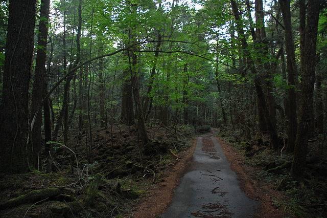 Hutan Aokigahara : Hutan Bunuh Diri di Kaki Gunung Fuji