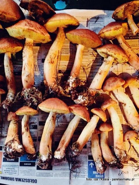 borowik wysmukły , borowik wrzosowy , złotak wyniosły , borowiki , las sosnowy , mikoryza , mykologia , atlas grzybów , gatunek inwazyjny , grzyby gatunkami , grzybobranie