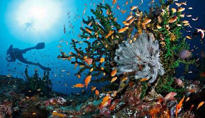adalah sebuah pulau yang terletak di ujung timur kepulauan Nusa Tenggara WISATA PULAU ALOR