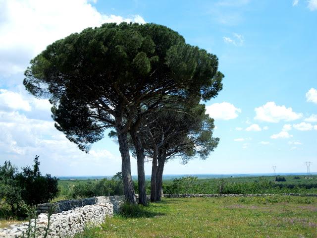Murge Puglia alberi collina