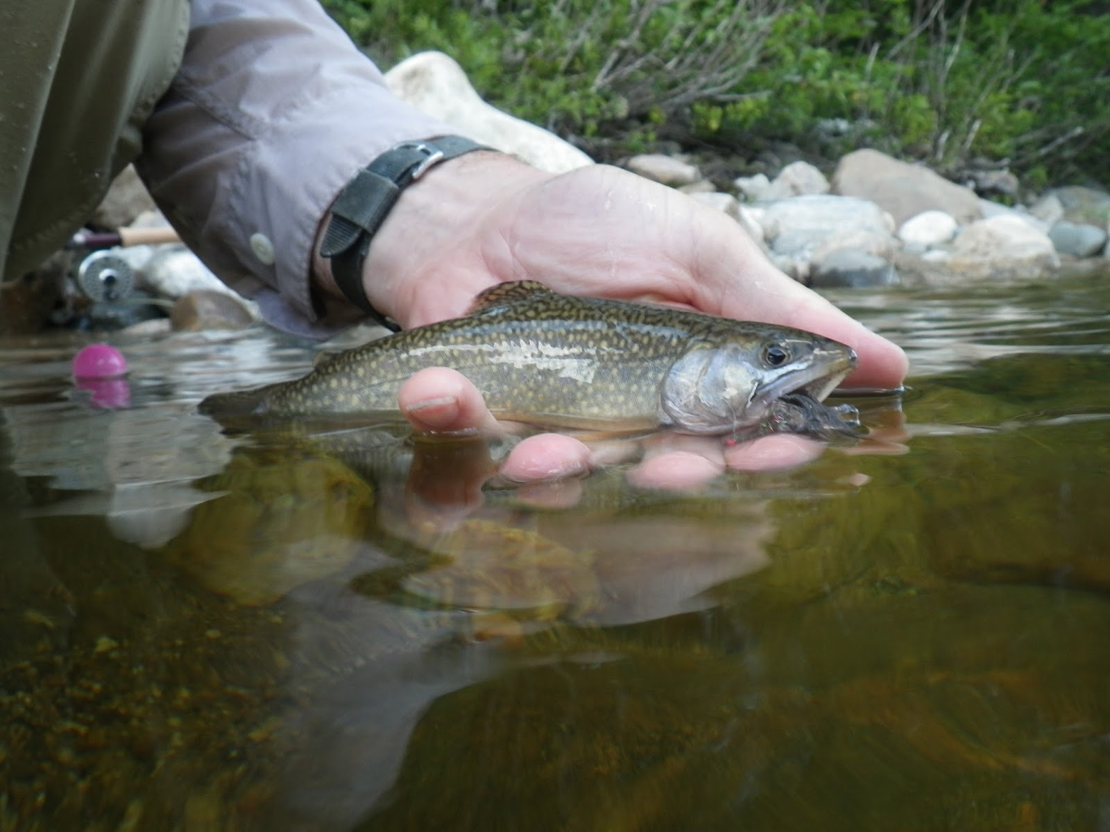 First cast fly fishing fly fishing lessons in new for Fly fishing classes near me